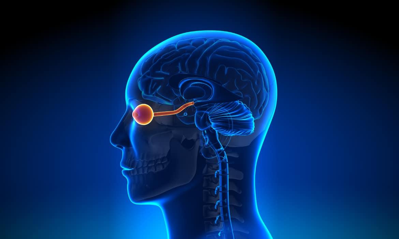eyewindowtobrain